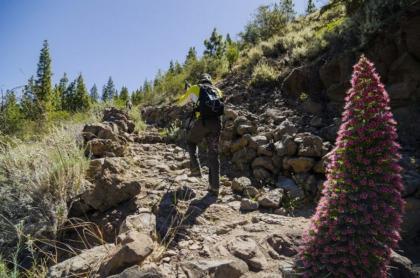 El Tenerife Walking Festival 2021 abre sus inscripciones