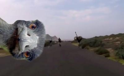 Vídeo: ¿Eres más rápido en bicicleta que un avestruz?